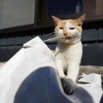 猫の表情を写真で表現する