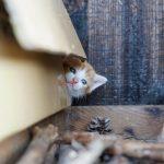 子猫の季節