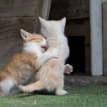 抱きつく猫を撮る