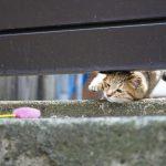 港町の仔猫が元気に遊ぶ姿