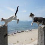 佐栁の子猫たち