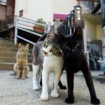 和歌山の猫たち