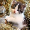 いい猫写真って何?を教えてくれるバイブル