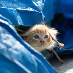 船で育つ子猫たち