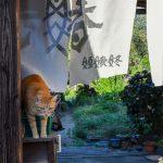 さぬき広島で猫写真