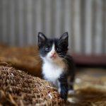牛舎の猫たち
