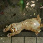 祝!インスタで10,000いいねの猫写真